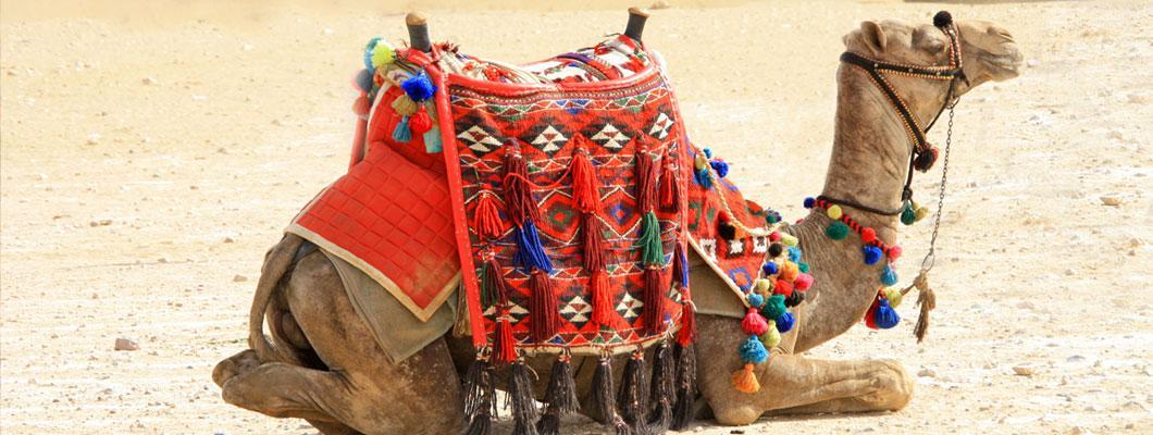 Camel Racing Muscat Oman